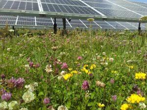 Solar with wild flowers 300x225 - Solar with wild flowers