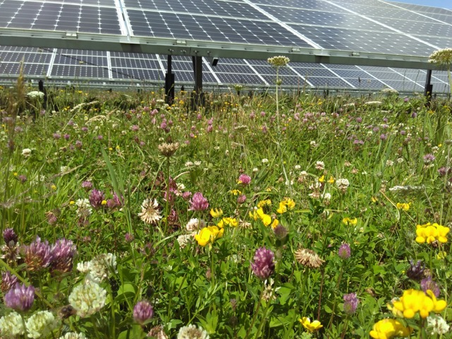Solar with wild flowers - Creacombe