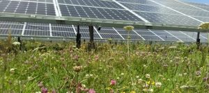 cropped Solar with wild flowers 300x134 - cropped-Solar-with-wild-flowers.jpg