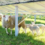 solar and sheep 150x150 - Gallery