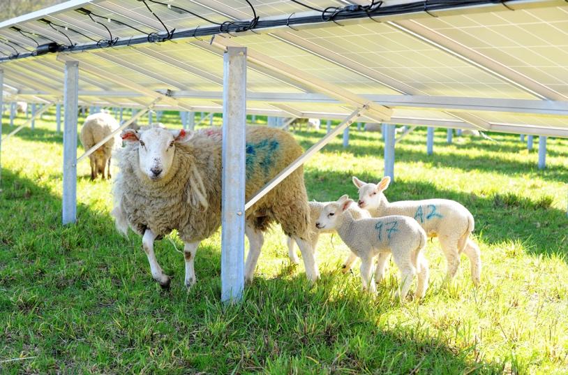 solar and sheep - Creacombe