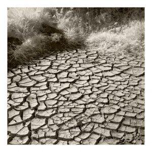 Creacombe dry May 2020 300x300 - Latest News
