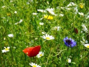 Wildflowers 300x225 - Latest News