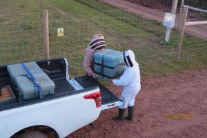 transferring the colonies 300x200 - Latest News